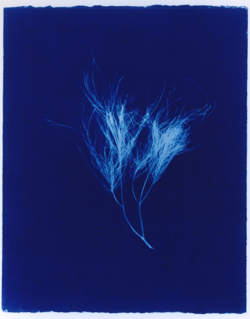 Sheoak, 2003