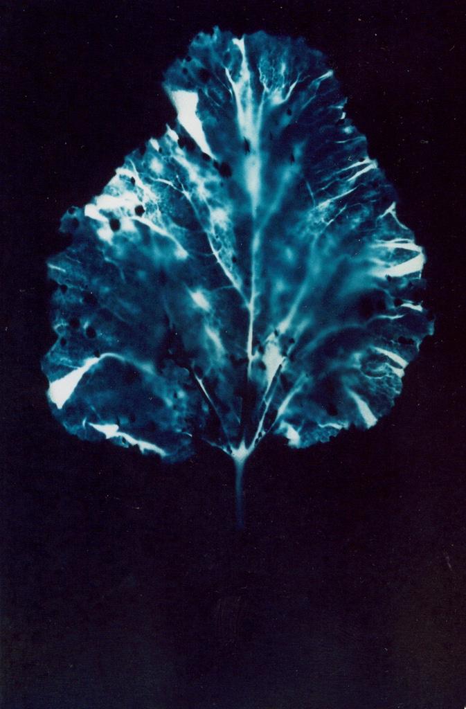 Rhubarb Leaf, 2004