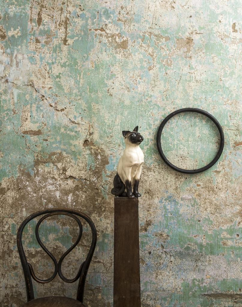Cat, Vic. 2016